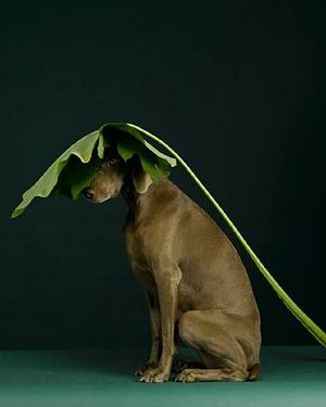 william_wegman_1