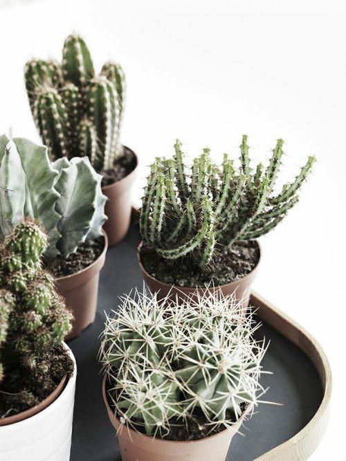 viernes de inspiración - cactus (10)
