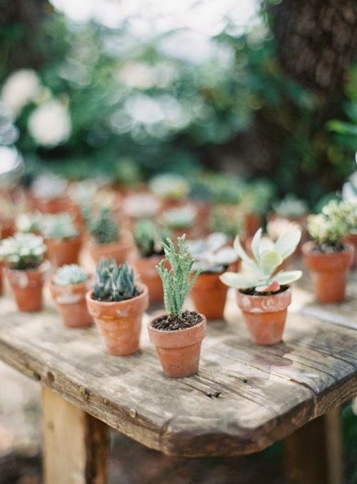 viernes de inspiración - cactus (17)