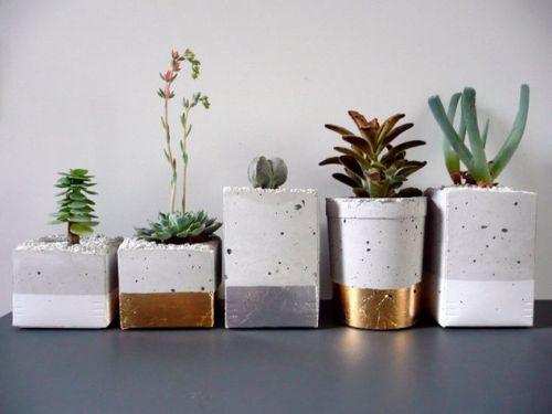 viernes de inspiración - cactus (19)