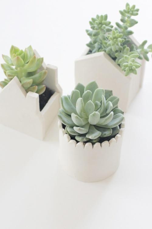 viernes de inspiración - cactus (2)