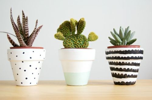 viernes de inspiración - cactus (3)