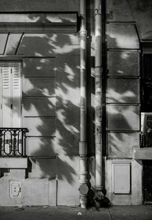 Paris Tree Shadows by Michael Wolf (3)