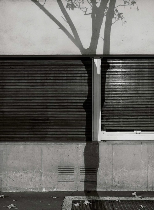 Paris Tree Shadows by Michael Wolf (4)