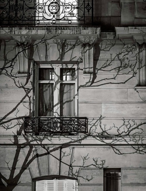 Paris Tree Shadows by Michael Wolf (5)