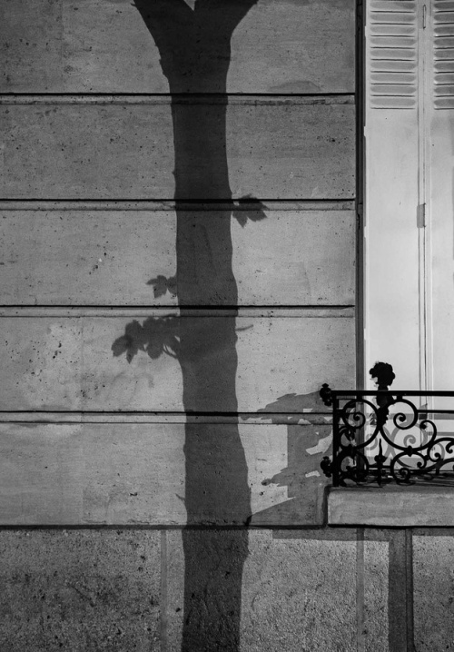 Paris Tree Shadows by Michael Wolf (7)