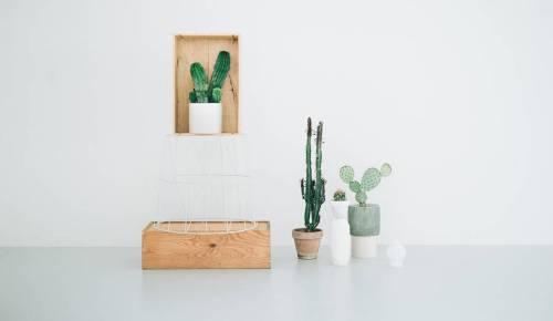 kaktus-0-900x523