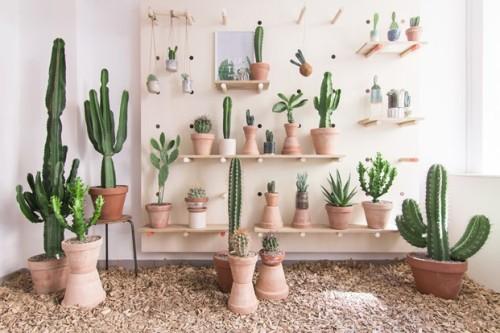 Kaktus København (1)