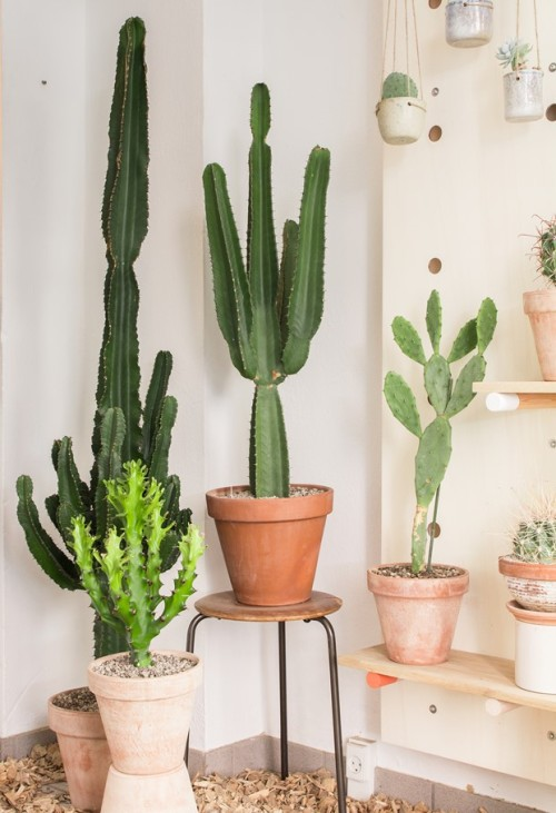 Kaktus København (2)