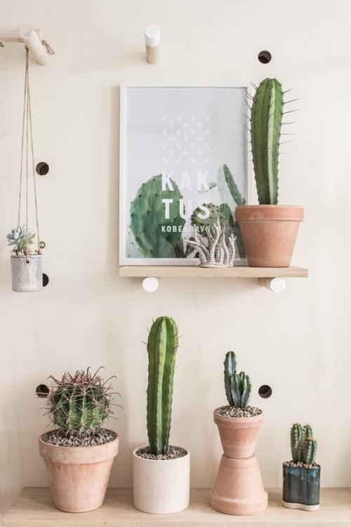 Kaktus København (3)