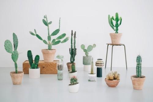 Kaktus København (4)