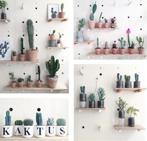 Kaktus København (5)