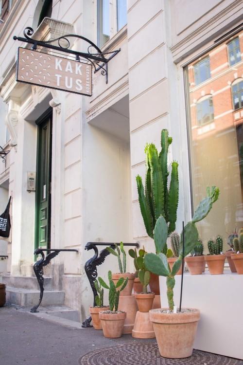 Kaktus København (8)